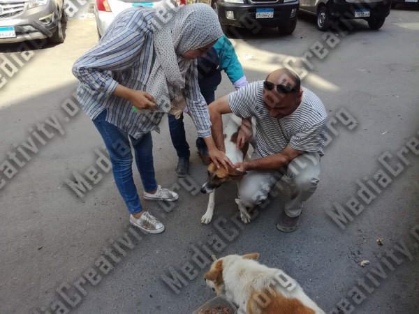 تطعيم كلاب الشارع بالإسماعيلية ضد السعار