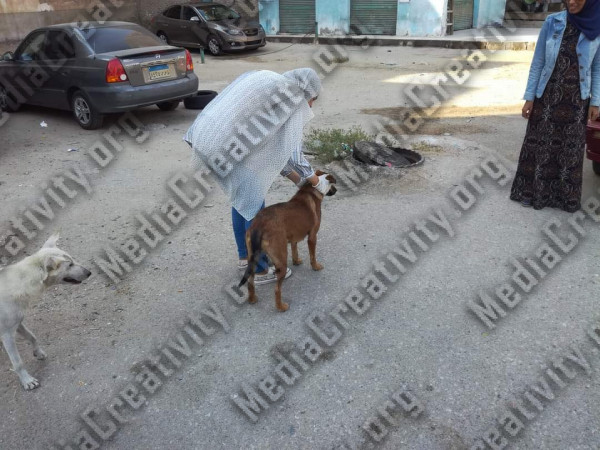 تطعيم الكلاب بالإسماعيلية ضد السعار