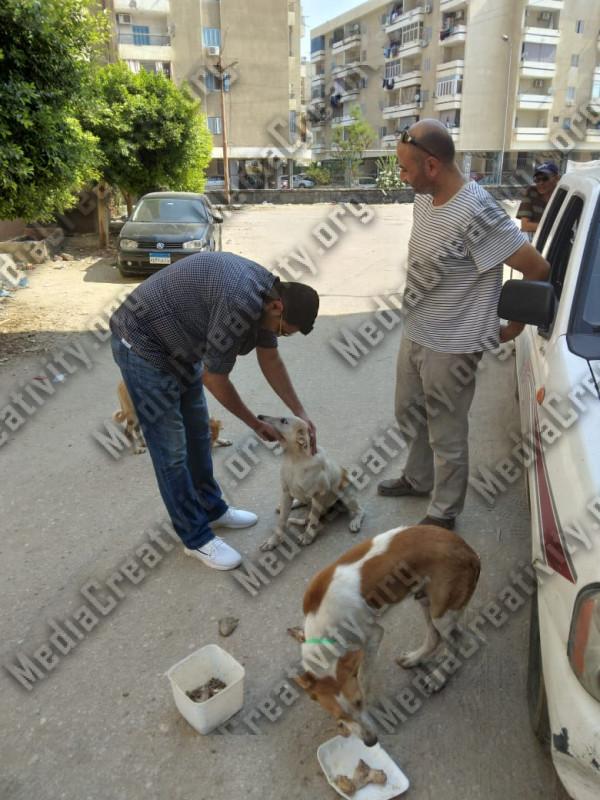 تطعيم كلاب الشوارع بالإسماعيلية ضد السعار